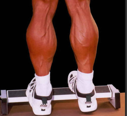 Músculo gastrocnemio (gemelos) - Punto Fape