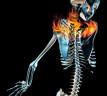 Anatomía: el hombro