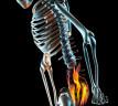 Anatomia: la zona lumbar