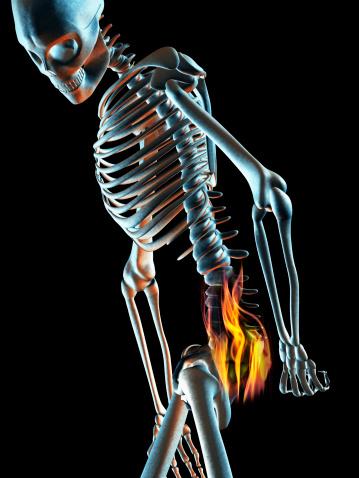Anatomia: la zona lumbar - Punto Fape