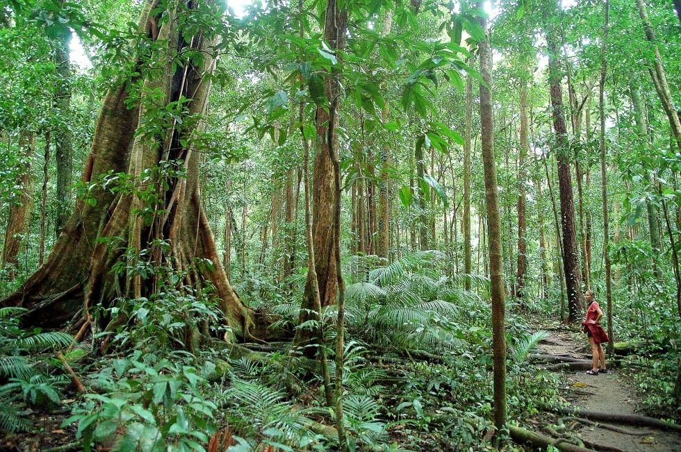Viaje al Bosque pluvial de Daintree