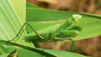 Tang Lang Quan: Boxeo de la Mantis Religiosa