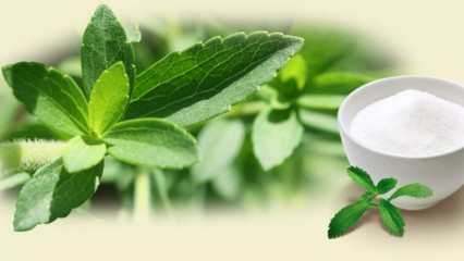 stevia endulzante natural