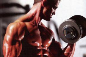 Memoria muscular, los músculos se acuerdan