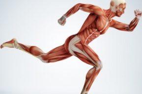 Beneficios del entrenamiento de los músculos antagónicos