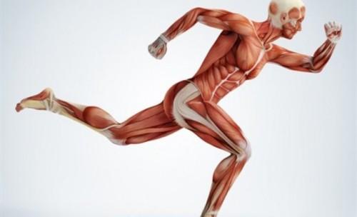 beneficios trabajo músculos antagonicos
