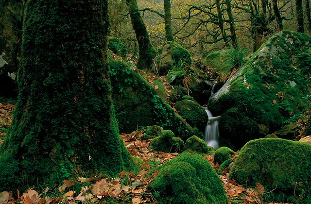 Primavera, descubre el Parque Natural de los Alcornocales en Cádiz