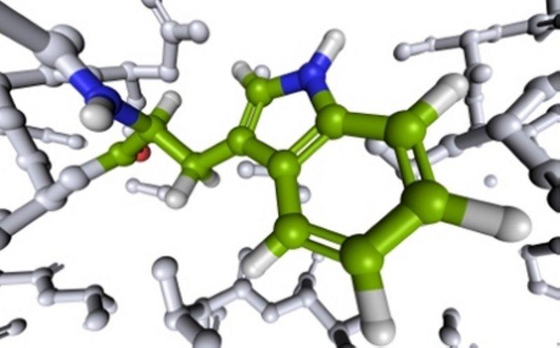Importancia de los aminoácidos en la dieta del deportista 1