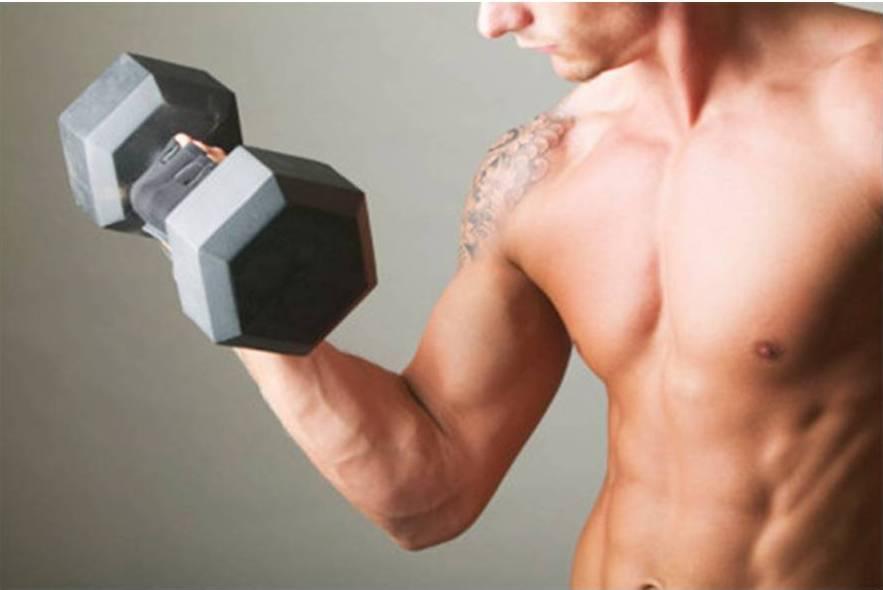 Principios de la hipertrofia muscular 1