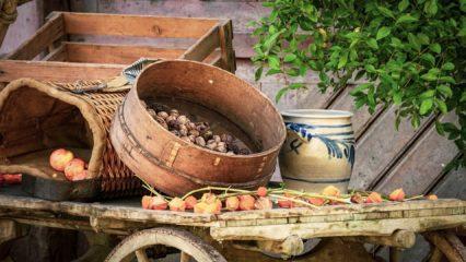 Conoce las principales propiedades de los frutos secos